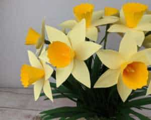 easy paper daffodil and free template